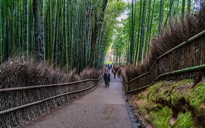 Kyoto_210319_DSB0801