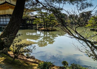 Kyoto_Rokuon-ji Golden Temple_200319_DSB0253