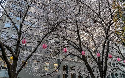 069_Tokyo_270319_DSB5937