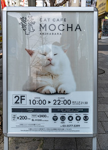 014_Tokyo_280319_DSC5485