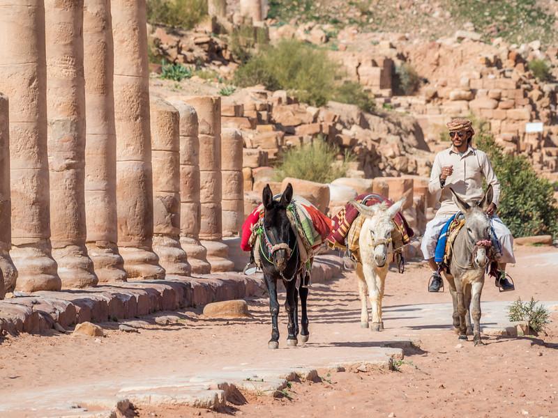 Donkey Driver, Petra, Jordan