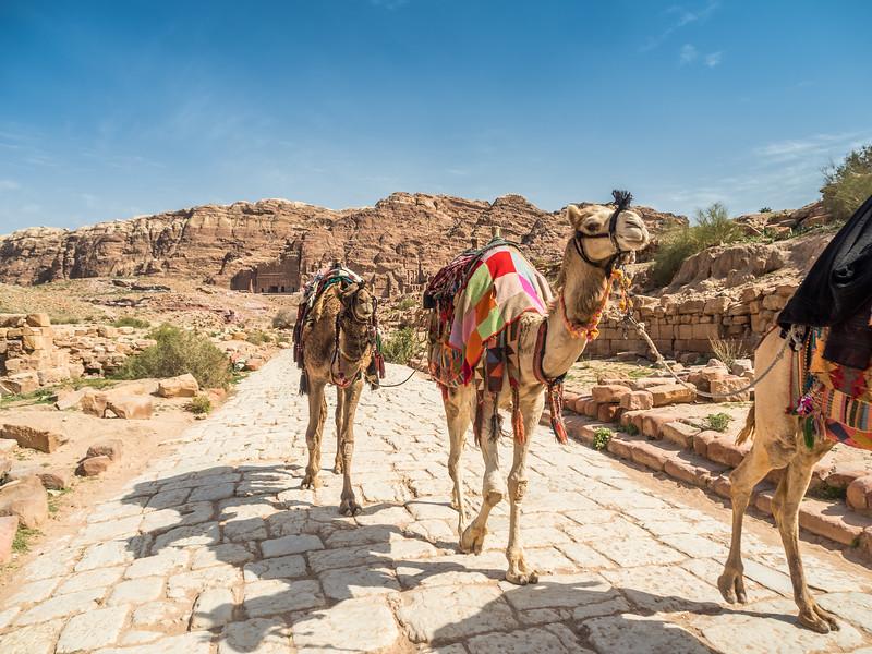 Camel Train, Petra, Jordan