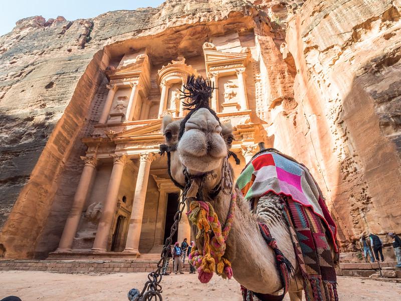 Camel Guide, Petra, Jordan