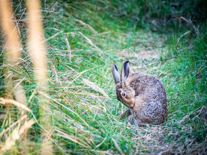 A Rabbit in the Grass, Forstenrieder Park, Munich, Germany
