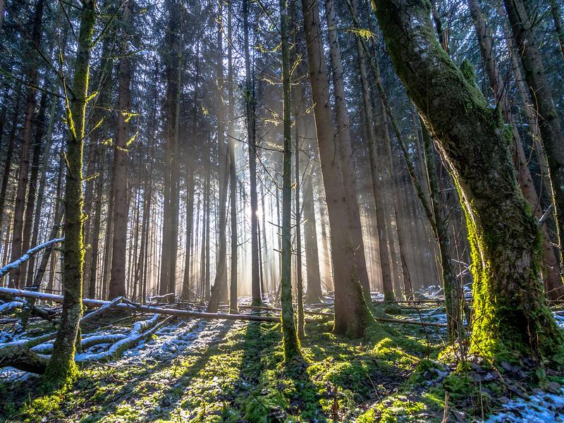 Winter Revelations, Perlacher Forst, Munich, Germany