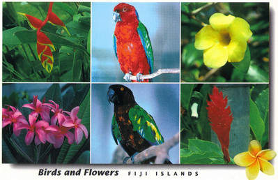 027_Birds and Flowers of Fiji Islands