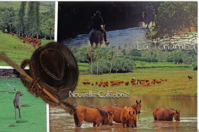 275_East Coast  Stockman, Cowboy Breeding Tradition