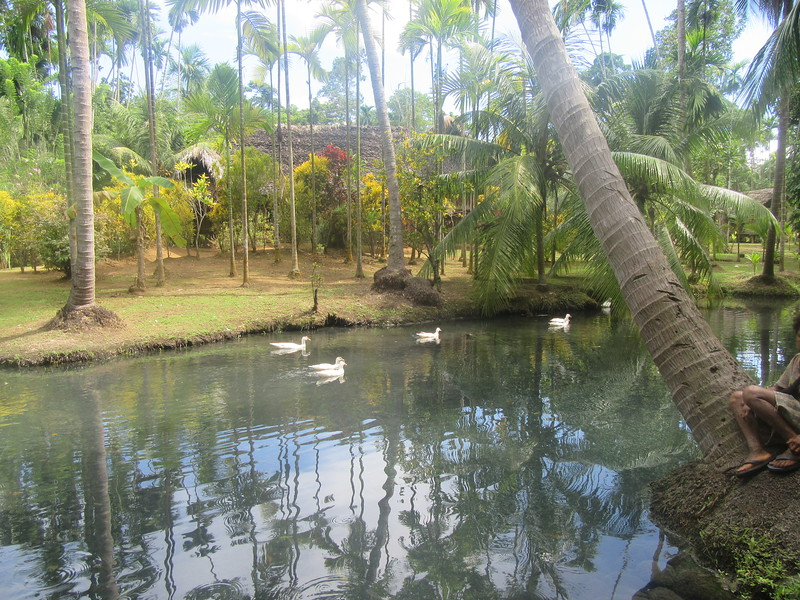 244_Along the Lae Highway, 20 minutes from Madang  Balek Nature Sanctuary  3 clans  1 tribe