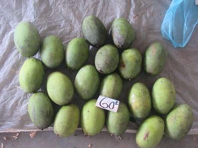 140_Madang  Town Market  Mango  1 for 60 Tuyas ($0 25CND)