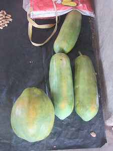 132_Madang  Town Market  Papaya (round one) and long ones (different species)