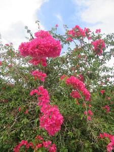 027_Northern Guam  Local Flora