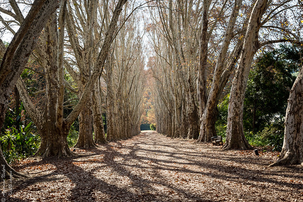 South Africa - Botanical Gardens, Pietermaritzburg
