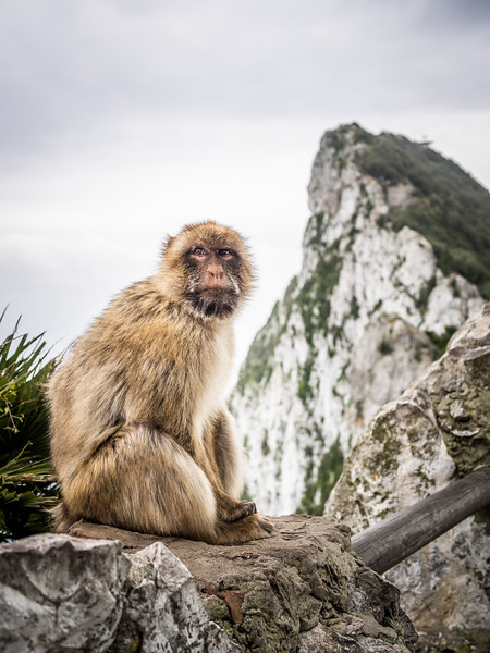 Classic Rock and Macaque, Gibraltar