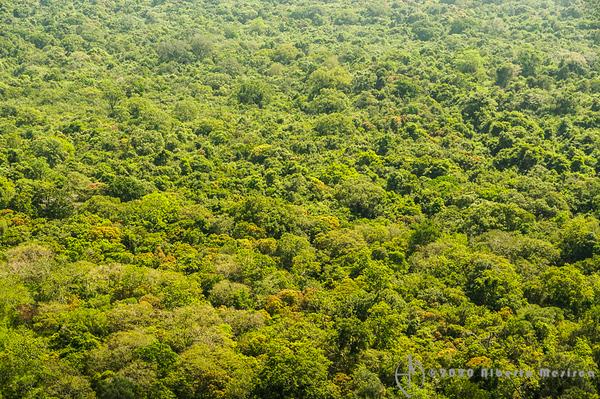 - www.albertomesircaphoto.com