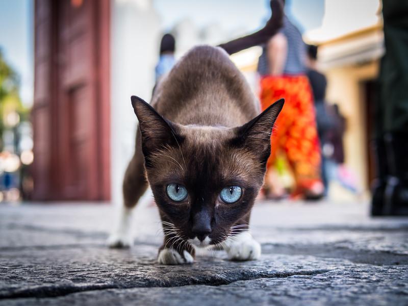 Siamese Cat, Grand Palace, Bangkok, Thailand