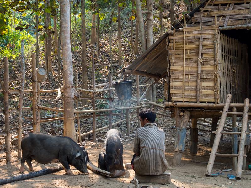 Swineherd, Laos