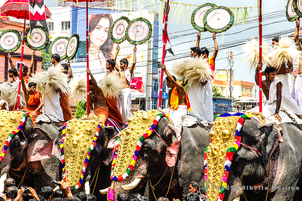 Elephants at the Thrissur (India) poraam wearing elephant accoutrements (Chamayam) and elephant caparison (nettipattam). On their top the faithful are engaged in the battle of colerful umbrellas (Kudamattam) weaving circular  fans made of peackok feathers (Aalavattom) and white pompoms (Venchamarom)