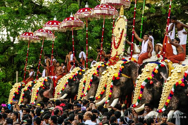 elephant lineup 2