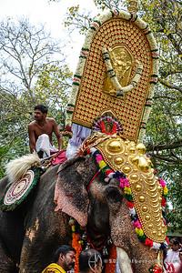 elephant nettipattam
