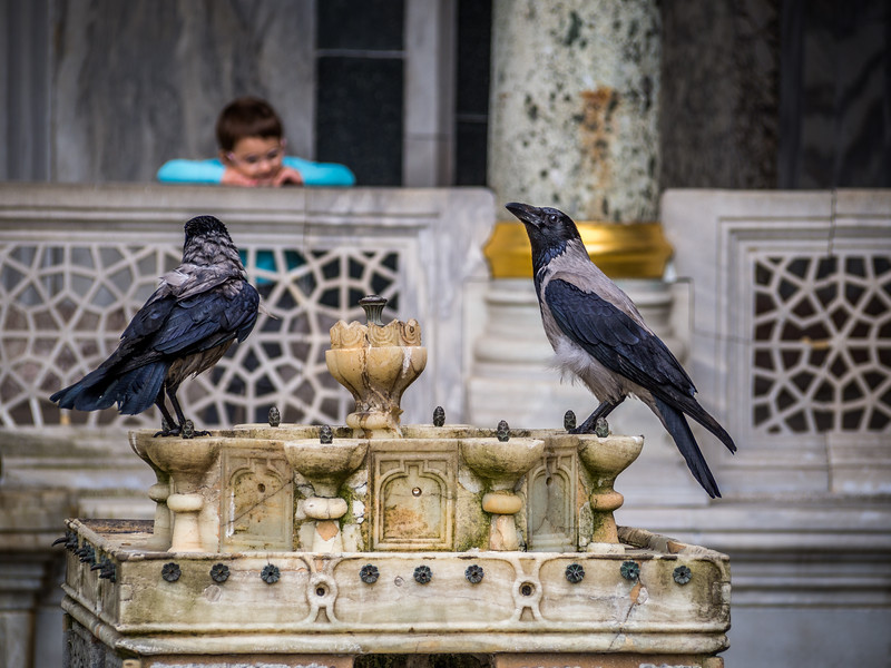 Watching Crows at the Fountain, Topkapı Palace, Istanbul, Turkey