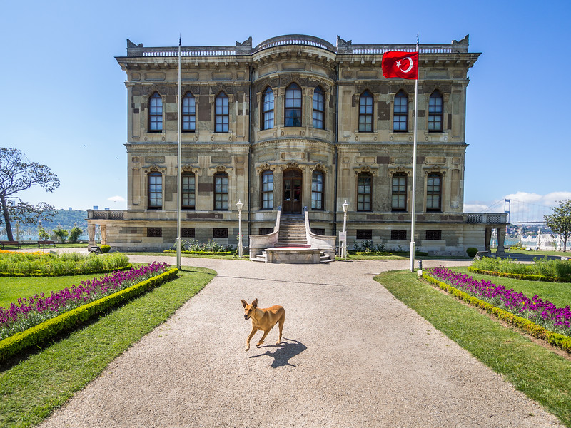 The Palace Dog Welcomes You, Küçüksu Palace, Istanbul, Turkey