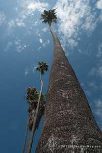 reaching for the sky #2