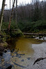 We started our hike at the south western end of the wilderness, at the trailhead for the Yellow Creek Trail. After a brief hike through thick rhododendrons we came across the aptly named creek.