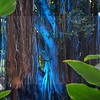 blue banyon