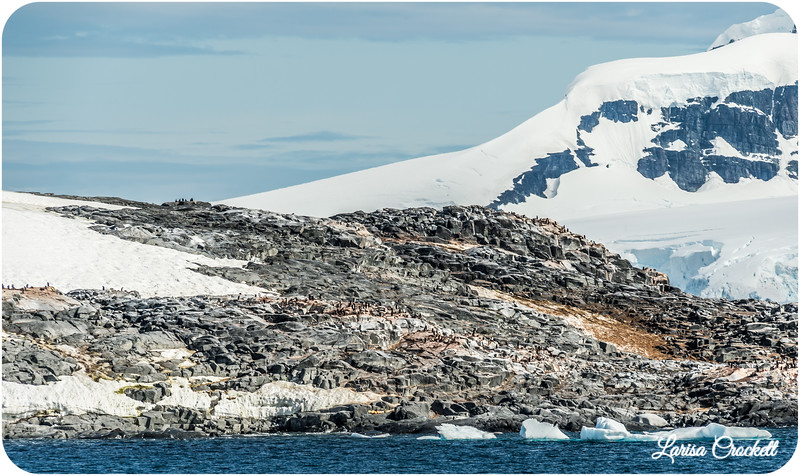 Penguin Colonies