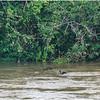Iguazu Fauna