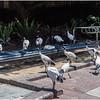 Australia Birds