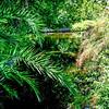 Garden of the Groves, Freeport, Bahamas