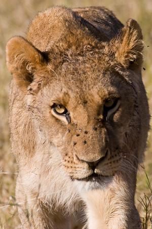 Botswana, Zambia, Kenya 2008
