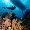 Diver swims over the reef, Cayman Brac