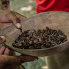 Cocoa Beans Roasted