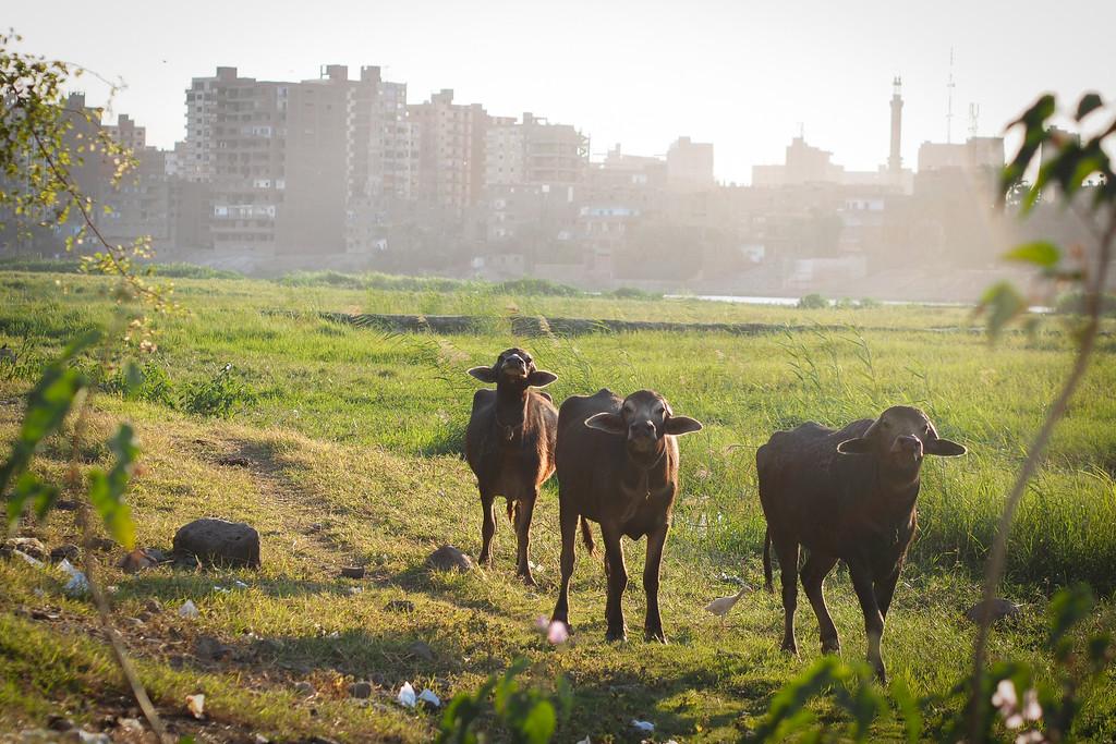 Sohag | Upper Egypt