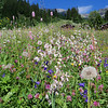 fields of flowers and ski lifts above