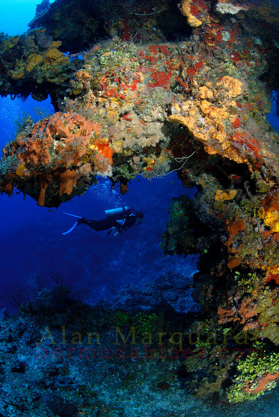 A diver swims on the south wall, next to a sponge encrusted reef, Grand Cayman.