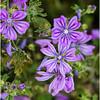 Greece Flora