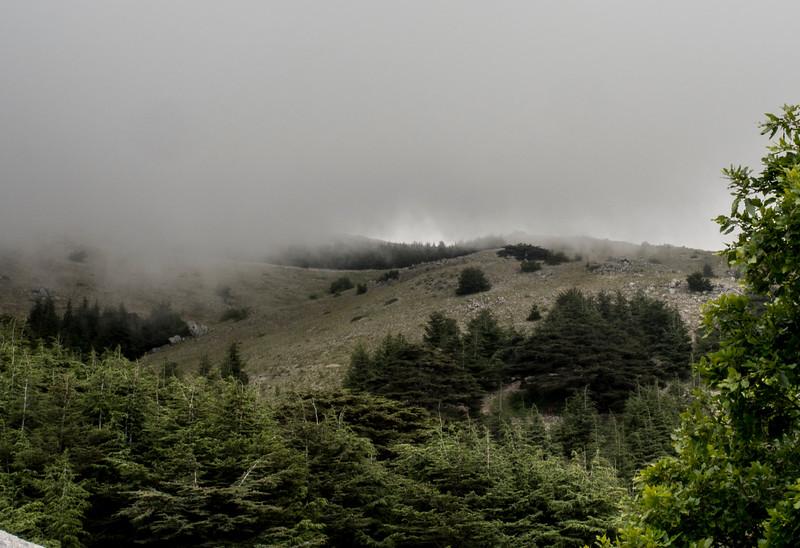 fog & mountains