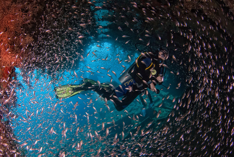 Diver swimming with Glassfish, in the wreck of the Dunraven, northern Red Sea, Egypt. 2012