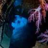 The soft corals in the wreck of the Dunraven, northern Red Sea, Egypt. 2012