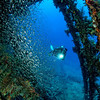 Inside the bow section of the wreck of the Carnatic, northern Red Sea, Egypt. 2012
