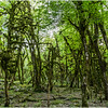 Самшитовый Лес/ Boxwood