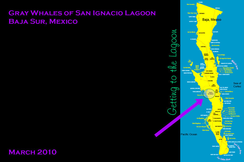 "March 1 – 2, 2010: Getting to San Ignacio Lagoon, <br /> Baja California Sur, Mexico<br /> <br /> We left our house on Monday night, after a full day of work, to catch our 8:30 PM flight to San Diego. The flight seemed short to us since we usually fly half-way around the world. The shuttle van dropped us off at the Holiday Inn near Old Town San Diego. I called our long-time friend, Sandy, who was also on the trip to let her know that we arrived. It was late, so we headed straight to bed.<br /> <br /> On Tuesday morning we met Sandy at the continental breakfast in the hotel lobby. We found Rich Kuehn and Dean Schuler there also, the couple that organized the trip for 16 of their friends. Most of the travelers in our group were from Rich and Dean's neck of the woods – Sea Ranch, which is located on the Mendocino Coast of Northern California. During breakfast, Steve, Sandy and I met some of the others that were in our group, they all seemed like a fun and friendly group.<br /> <br /> We all boarded the Greyhound-sized bus chartered by our tour operators, Baja Discovery, at about 9:30 AM and headed for the Mexico boarder. They warned us that it could take a long or short time to cross the border, depending on the mood of the Mexican border guards. It was our lucky day! The border guard made a sweep of our bus and let us through without any inspections! The border with Mexico is quite a scene – cars lined up all over, especially to come into the US. A very tall, double fence lines the border and men with rifles patrol both sides.<br /> <br /> Soon our bus arrived at the very small Tijuana airport. We collected the luggage and entered the terminal. The guard checked our passports and gave us Mexican Tourist Cards. Delayed by a headwind, our charter planes soon arrived and we loaded onto the two planes, ten on each. Steve and I sat behind the pilot so we could keep an eye on things. We all enjoyed looking out the window at the desolate desert and mountainous landscape of Baja. The single prop plane seemed to fly quite slowly – it took about two hours to reach the gravel landing strip located 35 miles west of the tiny town of San Ignacio and near the Pacific Coast. We all clapped when we landed, I am not sure why people feel the need to clap and I imagine the pilot doesn't take it as a compliment on his flying abilities. The weather was partly sunny, about 75 degrees, and windy.<br /> <br /> We boarded two vans and headed to a nearby camp on the coast to wait for the tide to rise. Our pangas, 22-foot open fishing boats that we will use for whale-watching, were anchored just offshore and couldn't come up to the beach to load the luggage and us because of the low tide. No matter – there was a small restaurant nearby and we all enjoyed some Mexican beers while we waited. Tired of waiting, they finally decided we should just wade out to the pangas which didn't seem like a problem to us. But then again we didn't have to carry the luggage! Soon we were boating in San Ignacio Lagoon to our tented camp, about twenty minutes away.<br /> <br /> Once we arrived in camp, the staff held a lottery to assign tents. Steve and I drew the tent closest to the water but farthest from the outhouse. We brought all our gear to the tent and set-up ""shop"". Finally settled in at about 6:30 PM, we all met in the dining tent for dinner and an explanation of what to expect for the week and then headed off to bed."
