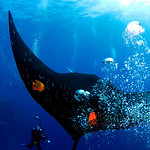 The Mantas, Socorro Mexico :