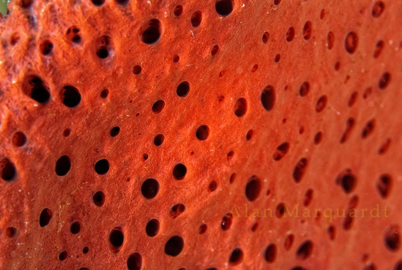Close up of a sponge, Anse Cochon (North Beach).