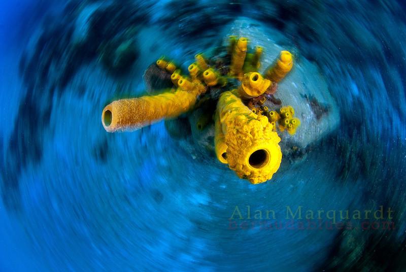 Yellow tube sponge, at Anse Cochon (South Beach).