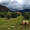 Saftey in numbers. Koycegiz - Dalyan, Turkey.