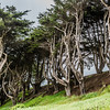 Sutro Heights Park/ Lands End